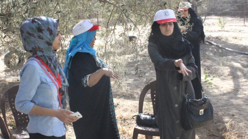 الاتحاد ينظم حملة لقطف الزيتون بعنوان زيتون بلادنا